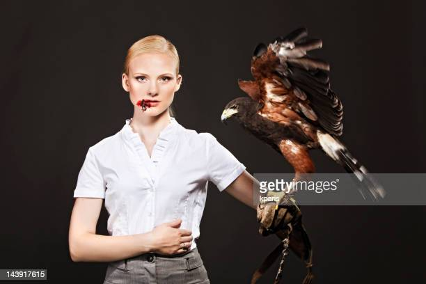 real predator - hawk stock photos and pictures