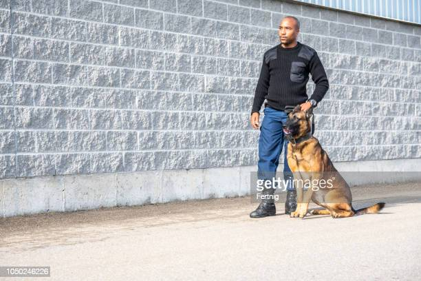 a real, trained k-9 handler with his dog - police dog stock photos and pictures