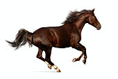 Realistic illustration of budenny horse galloping
