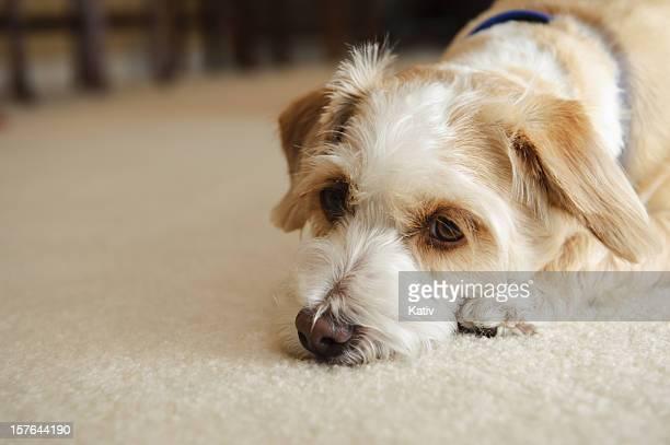 Really Sad Dog