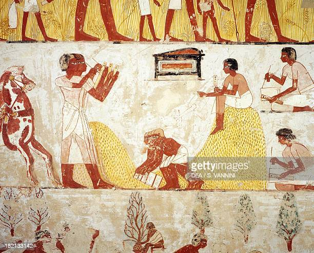 Reaping the corn tomb of Menna detail from the frescoes in the vestibule XVIII dynasty of Amenhotep III necropolis of Shaykh Abd ElQurna Luxor Egypt
