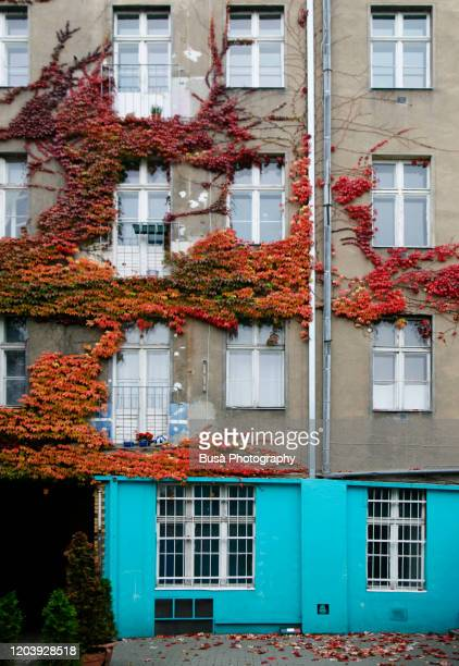 rear facade of residential building with vines in berlin, germany - berlin stock pictures, royalty-free photos & images
