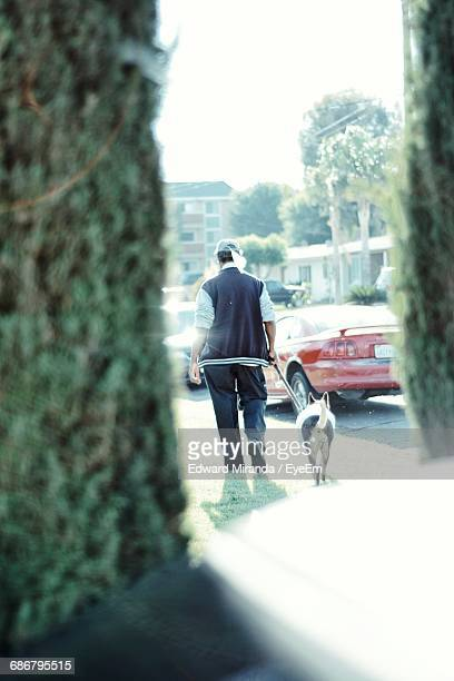 Rear View Full Length Of Man With Dog On Street Seen Through Window