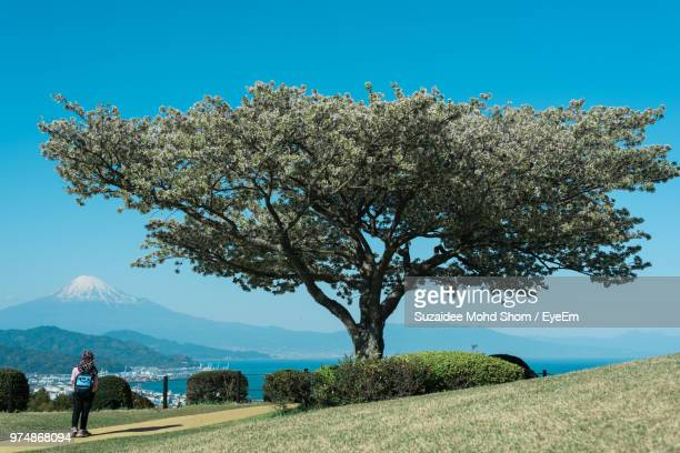 Rear View Full Length Of Woman Standing By Tree Against Mt Fuji On Field