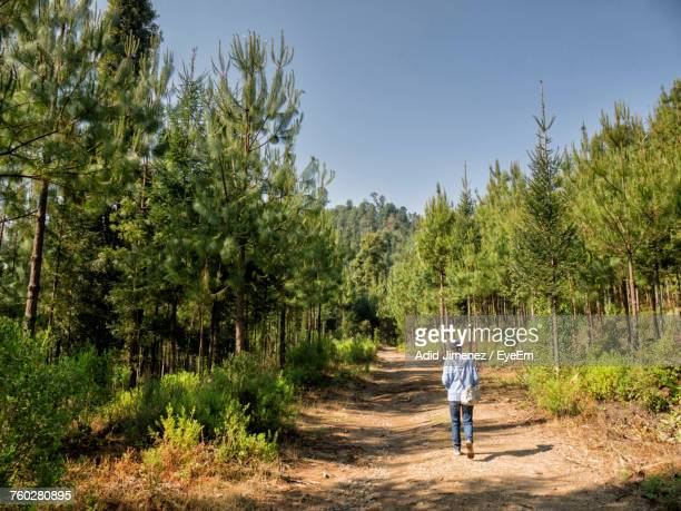 Rear View Full Length Of Woman Walking On Road At Forest
