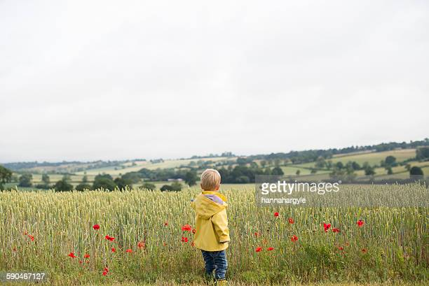 Rear view of a boy standing in a wheat field with poppies