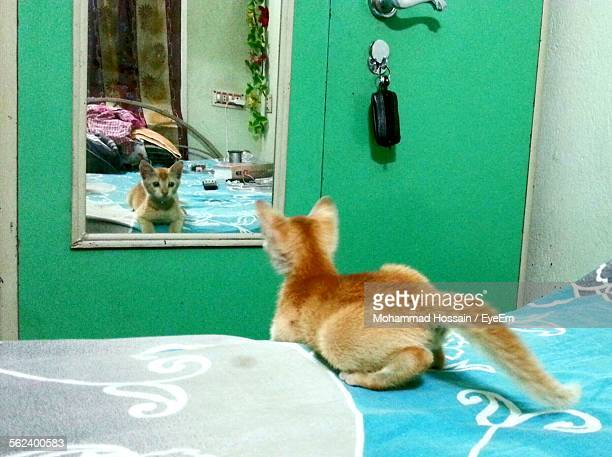 Rear View Of A Cat Looking At Mirror
