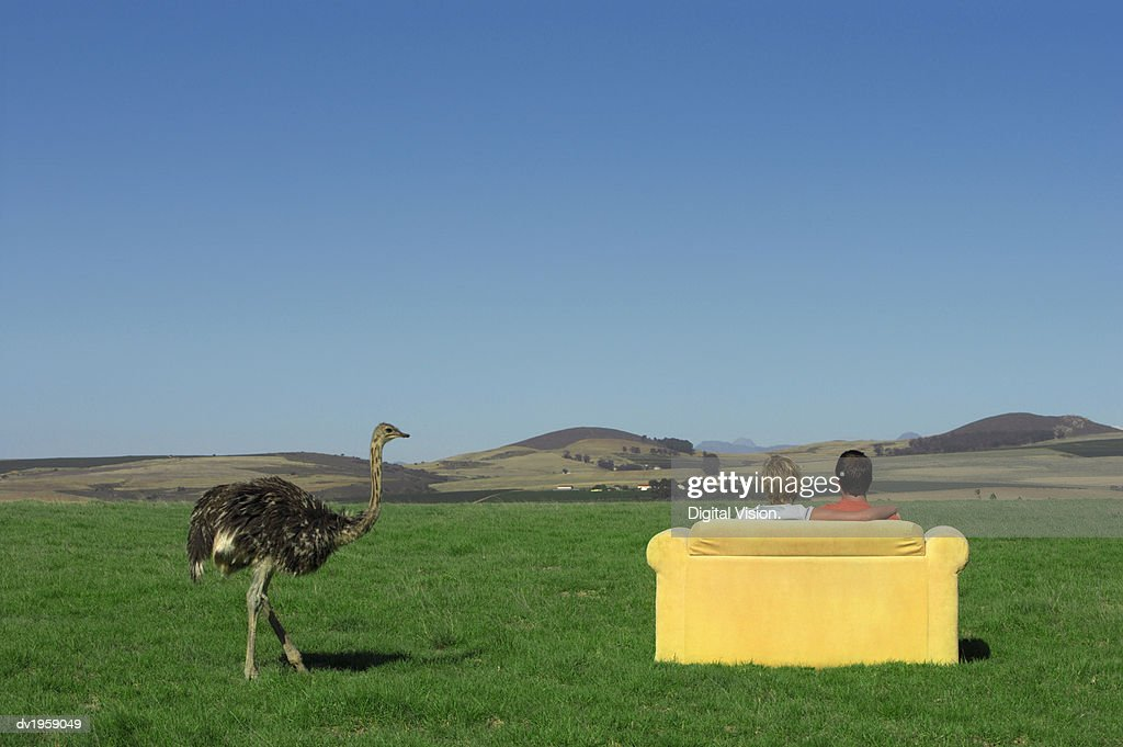 Rear View of a Couple Sitting on a Sofa and Looking at the View of Open Countryside by an Ostrich : Stock Photo