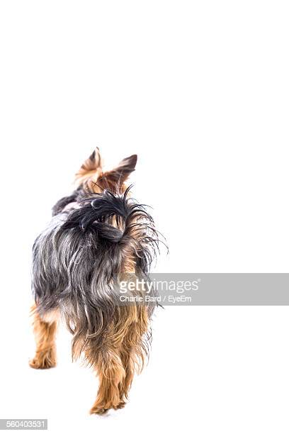 Rear View Of A Dog Over White Background