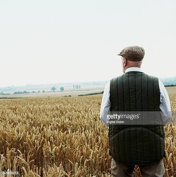 rear view of a farmer looking out over a wheat field - flat cap stock pictures, royalty-free photos & images