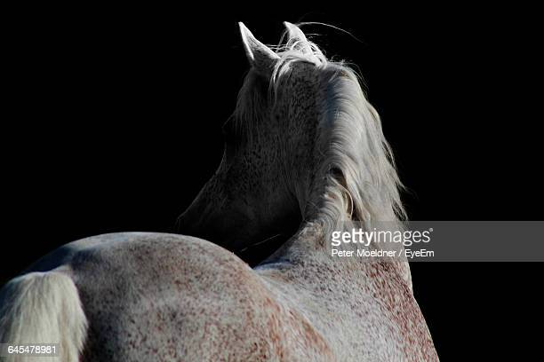 Rear View Of A Horse Over Black Background