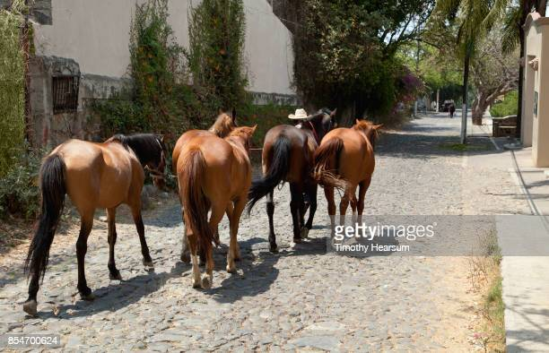 rear view of a man in a cowboy hat leading 5 horses down a cobblestone street - timothy hearsum stockfoto's en -beelden