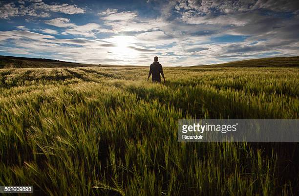 Rear view of a man standing in a green field at sunset
