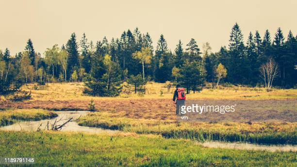 rear view of a man walking on a forest meadow - wilderness stock pictures, royalty-free photos & images