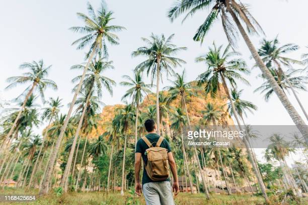 rear view of a man with backpack in palm tree grove on a tropical island - grand angle photos et images de collection