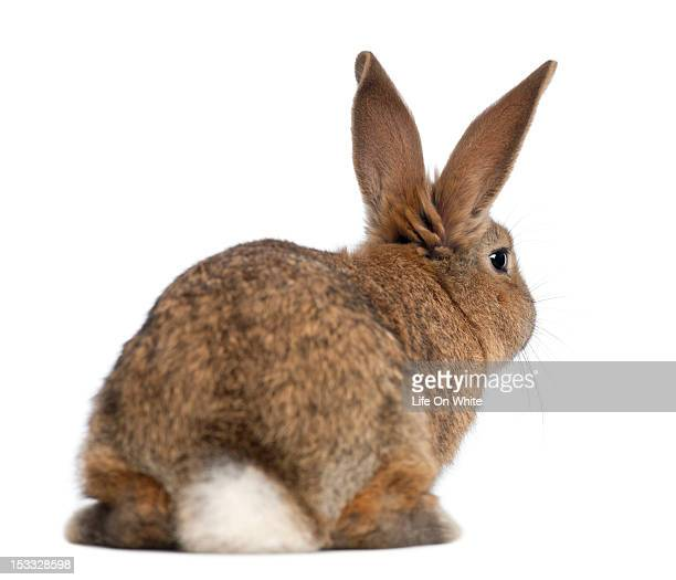 rear view of a rabbit - focus on background stock pictures, royalty-free photos & images