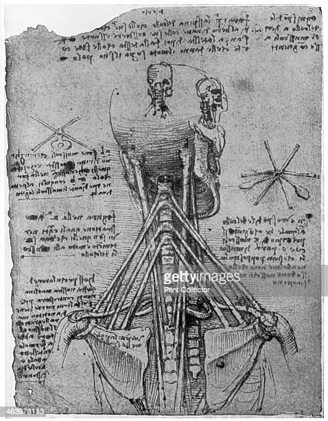 Rear view of a skeleton showing the sinews of the neck late 15th or early 16th century Found in the collection of the Royal Library Windsor Castle...