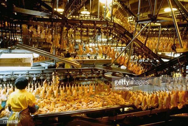 rear view of a woman working in chicken processing plant, lewiston, north carolina, usa - huhn geflügelfleisch stock-fotos und bilder