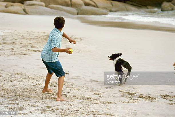 rear view of a young boy playing on the beach with his dog - throwing stock pictures, royalty-free photos & images