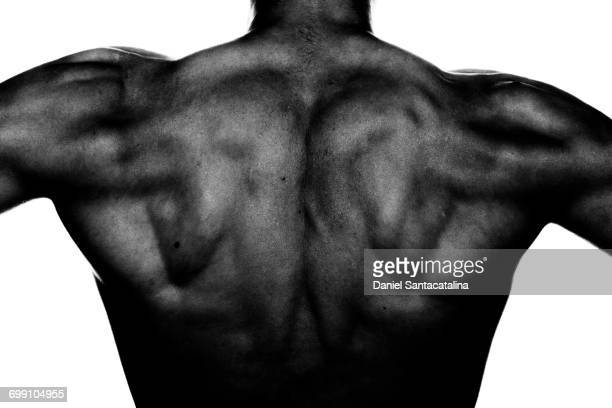 rear view of athletic male - human back stock photos and pictures