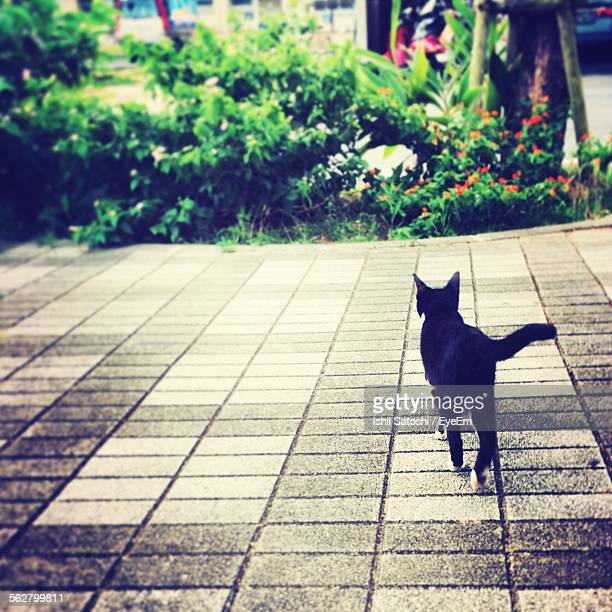 Rear View Of Black Cat Standing On Footpath At Park
