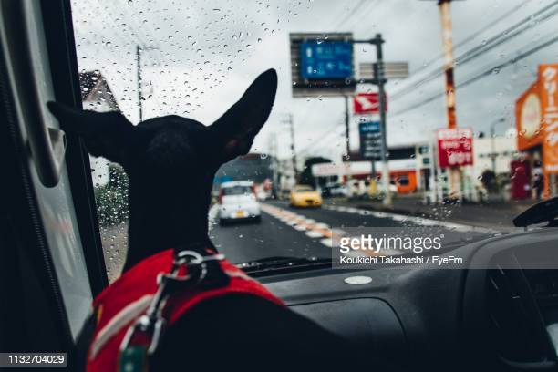 Rear View Of Black Dog In Car