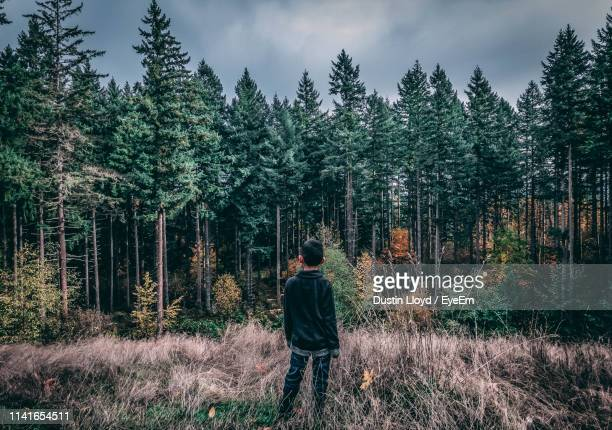 rear view of boy standing against trees in forest - one boy only stock pictures, royalty-free photos & images