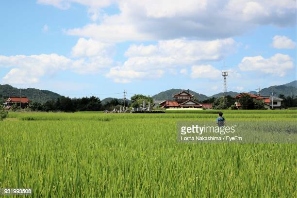 rear view of boy standing amidst plant against sky - hiroshima city stock photos and pictures