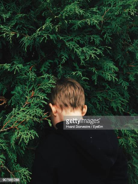 rear view of boy standing by tree - only boys stock pictures, royalty-free photos & images