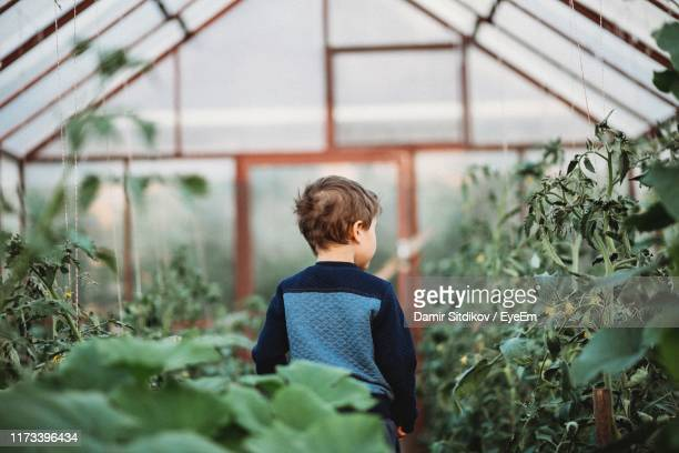 rear view of boy standing in greenhouse - 植物園 ストックフォトと画像