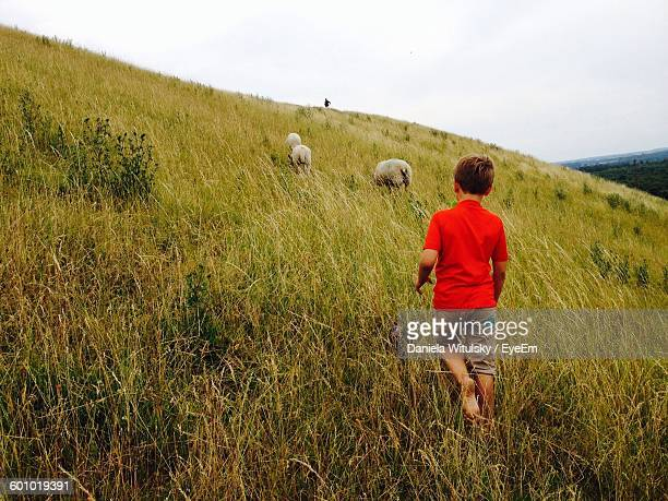 Rear View Of Boy Walking With Sheep On Grassy Field