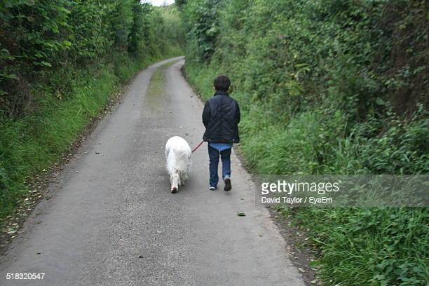 Rear View Of Boy With Dog Walking On Street Surrounded By Trees