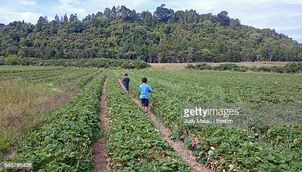 rear view of boys at strawberry fields - north island new zealand stock pictures, royalty-free photos & images