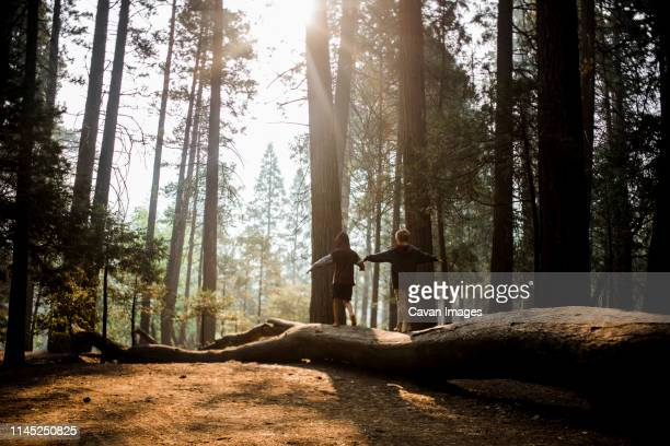 rear view of brothers with arms outstretched walking on log in yosemite national park - stamm stock-fotos und bilder