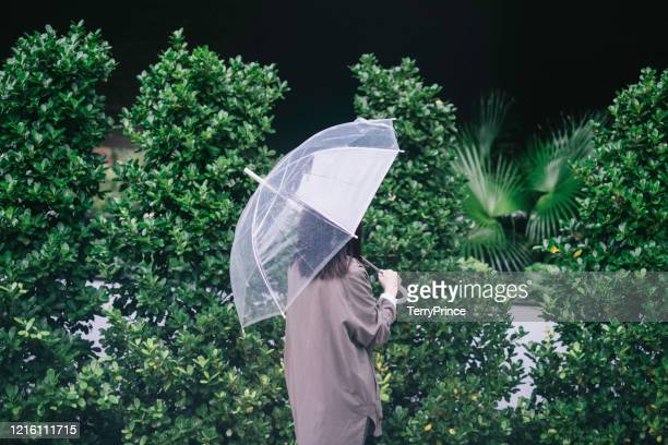 rear view of business woman with umbrella walking though a p峭帆金p昭 at night during rainy season - rainy season stock pictures, royalty-free photos & images