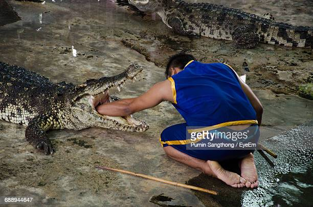 Rear View Of Caretaker Performing Stunt With Crocodile At Zoo