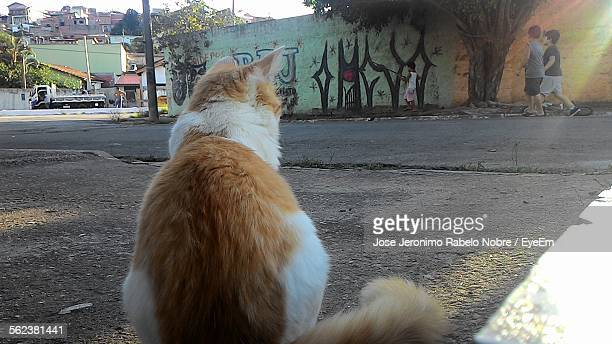 Rear View Of Cat On Street