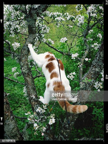 Rear View Of Cat On Tree In Park