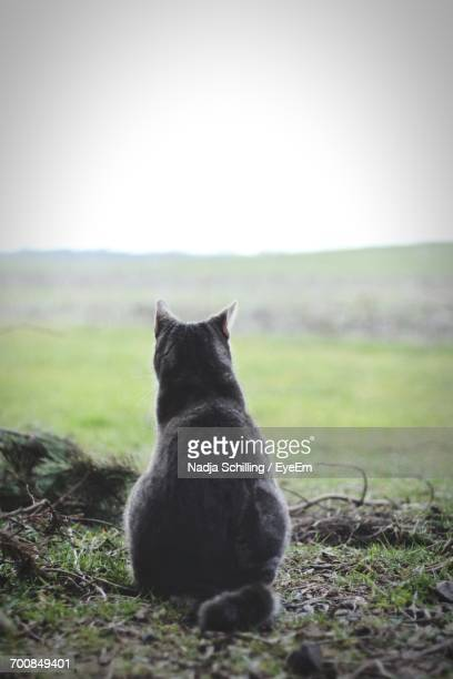Rear View Of Cat Relaxing On Grassy Field