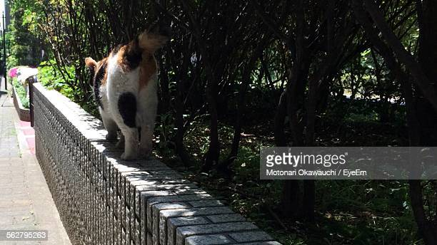 Rear View Of Cat Walking On Retaining Wall