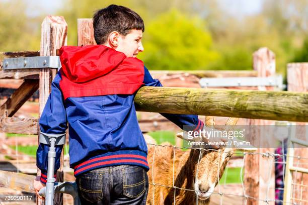 rear view of disabled boy touching goat while looking away - only boys stock photos and pictures