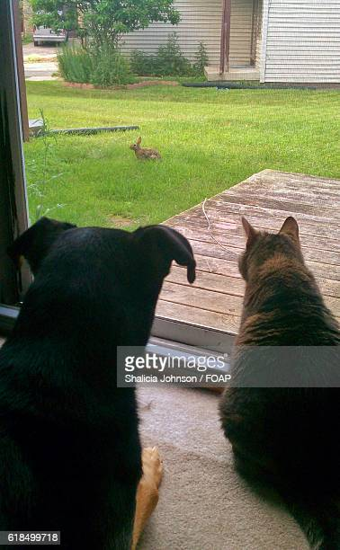 Rear view of dog and cat looking rabbit through an window