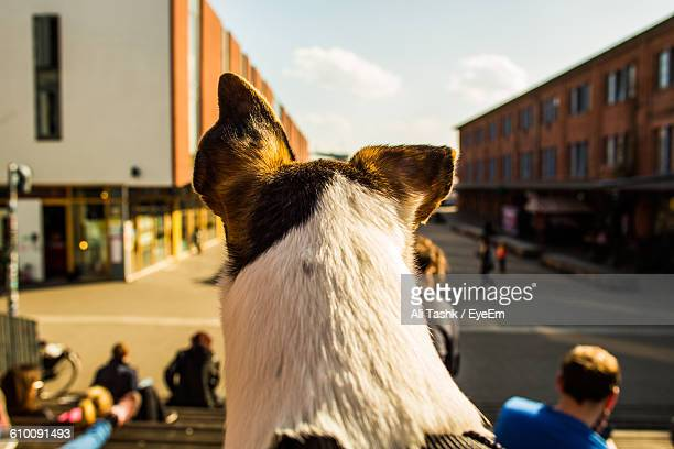 Rear View Of Dog By Buildings Against Sky
