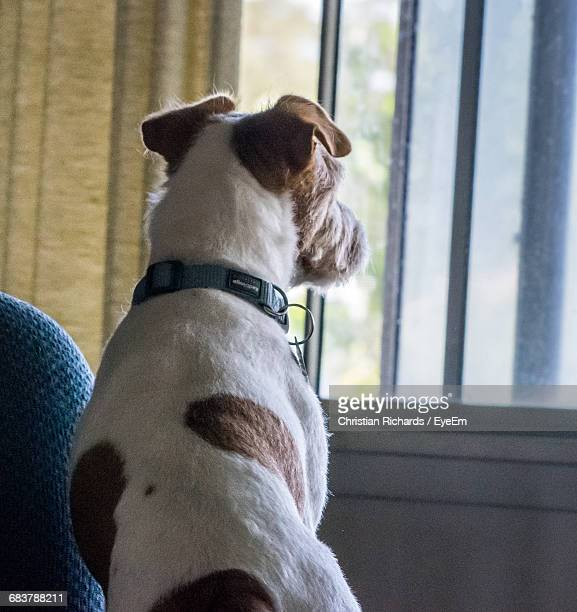 Rear View Of Dog By Window At Home