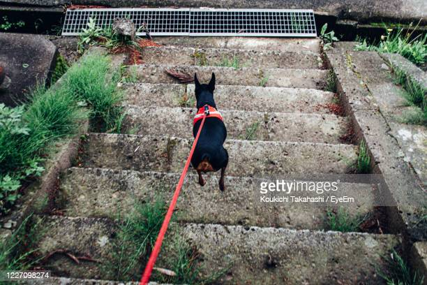 rear view of dog jumping  on staircase - koukichi stock pictures, royalty-free photos & images