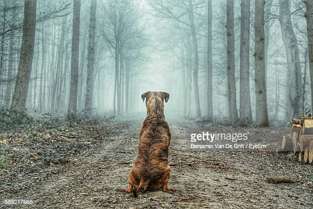 Rear View Of Dog Sitting In Forest During Foggy Weather