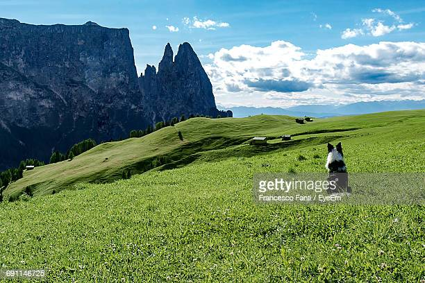 Rear View Of Dog Sitting On Grassy By Rocky Mountains Against Sky