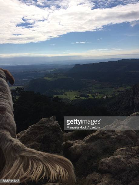 Rear View Of Dog Sitting On Rock Overlooking Landscape Against Cloudy Sky