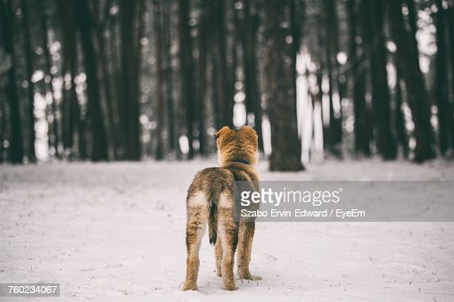 Rear View Of Dog Standing On Snow Covered Field