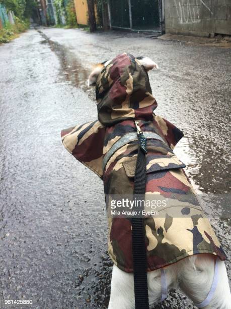 Rear View Of Dog Wearing Raincoat While Walking On Wet Road